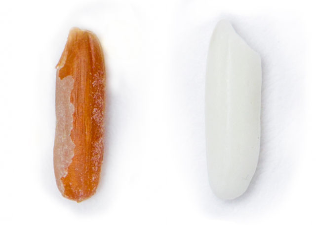 A white rice grain and a brown rice grain